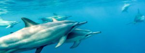 Excursions - Dolphin Watching-image-1