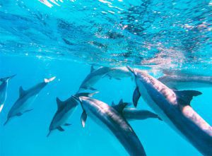 Excursions - Dolphin Watching-image-4