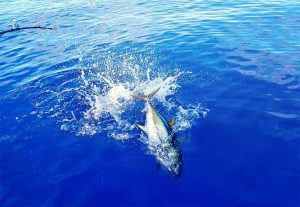Excursions-Tuna-Fishing-image-2