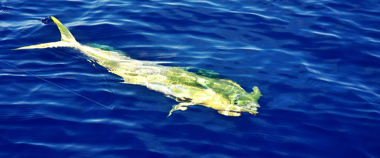 Excursions-Tuna-Fishing-image-4